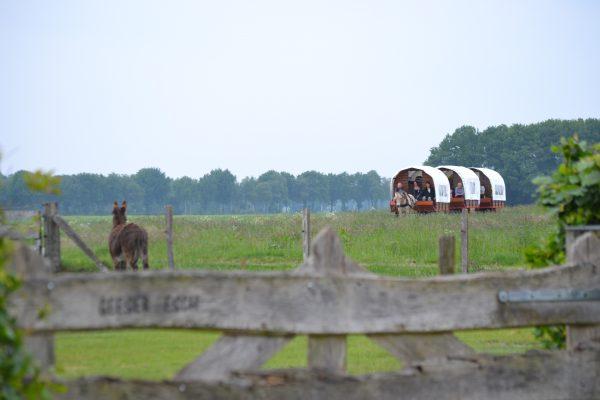 Thor-Heste Huifwagens
