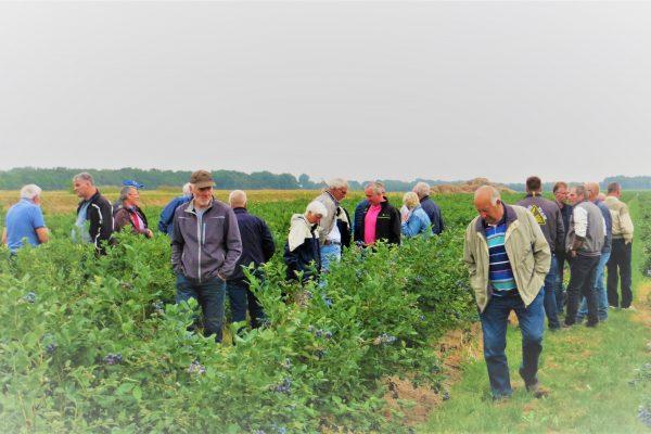 Boermarke op bezoek bij de Blauwe bes