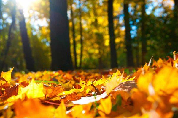 Herfst: blij met de bladbakken