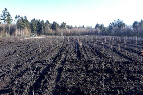 Staatsbosbeheer plant nieuw bos in boswachterij Gees